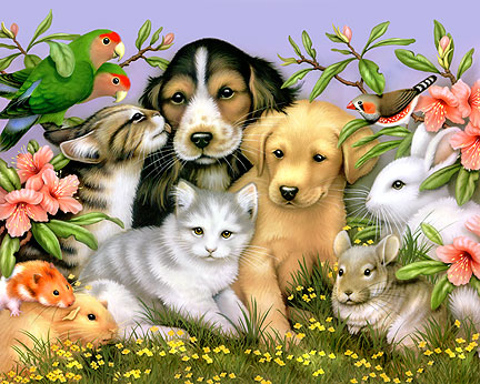 Pets</a><br> by <a href='/profile/Dan--Owner-/'>Dan -Owner-</a>